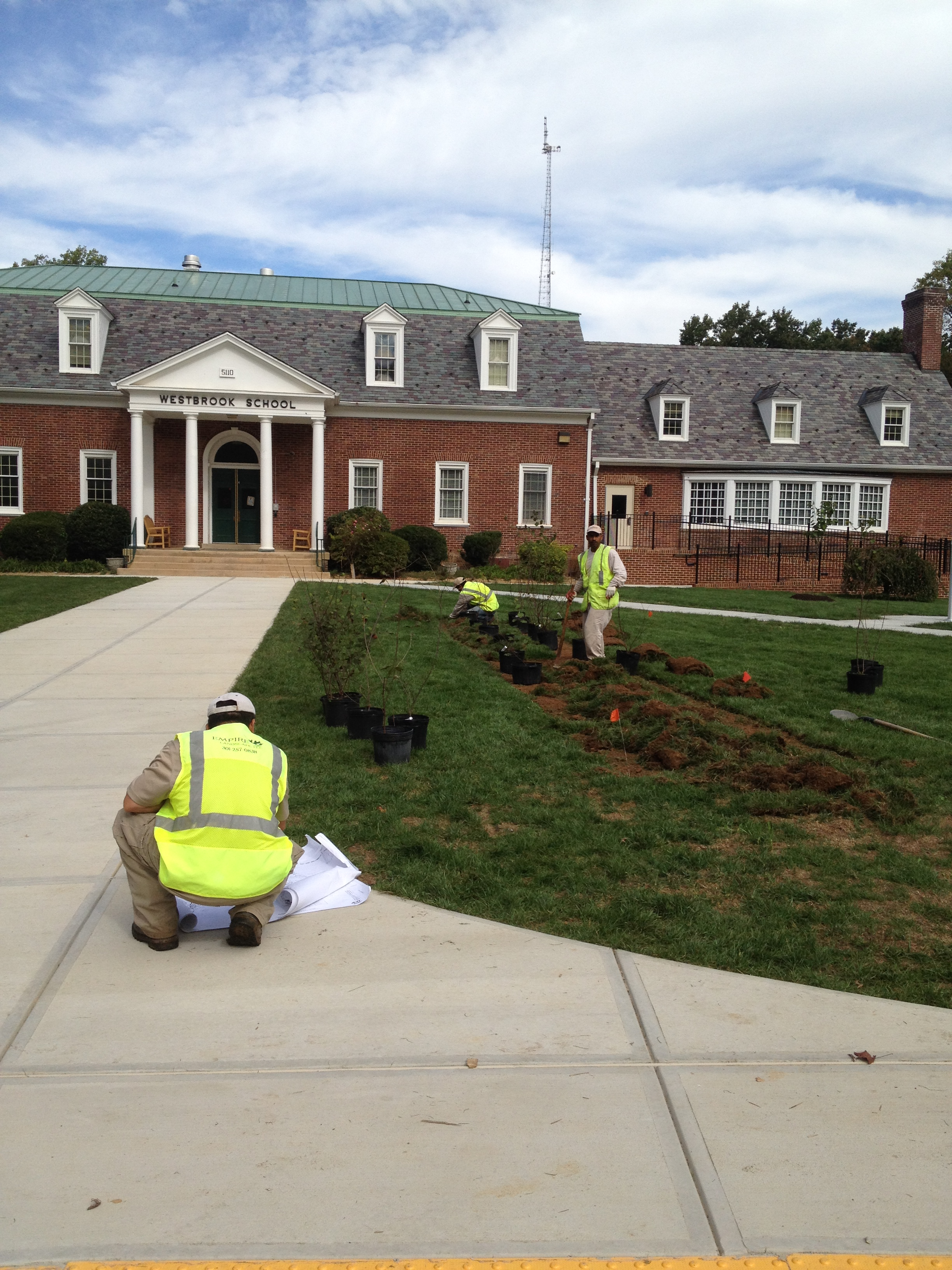 Baby trees planted on Westbrook's front lawn last month are still a bit fragile.